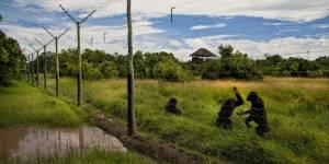 Chimpanzee Refuge