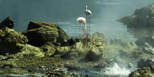 Crater Menengai Flamingos
