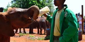 Elephant Orphanage Feeding Time