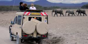 Elephant Watching In Amboseli