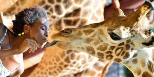 Giraffe Encounters